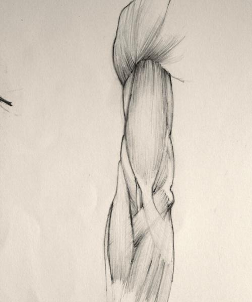 Dibuix anatòmic